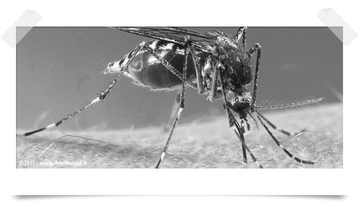 La prévention contre les moustiques