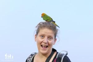 Bangkok-oiseaux- (29) copie