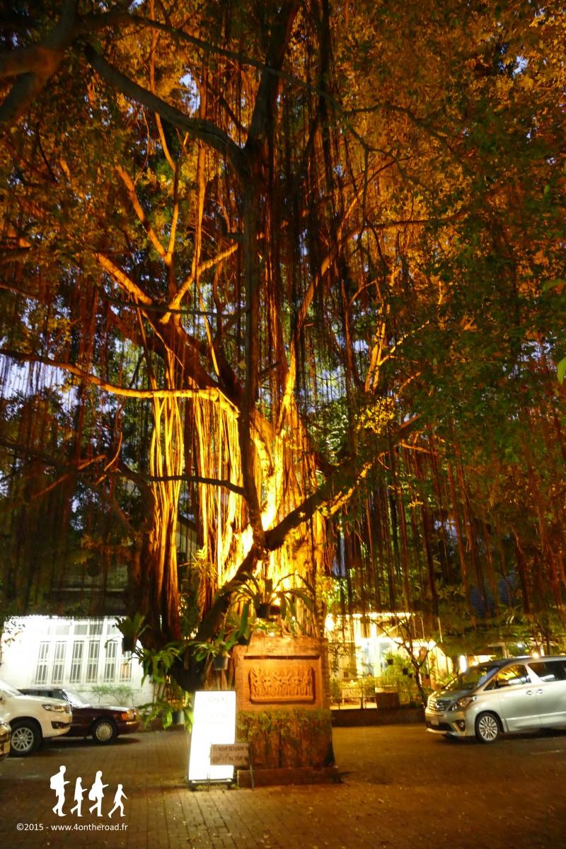 Jungle, Bangkok