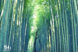 kyoto-arashiyama_002 copie