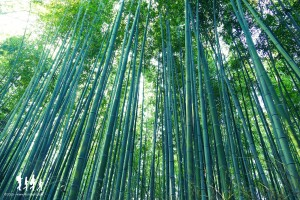 kyoto-arashiyama_003 copie
