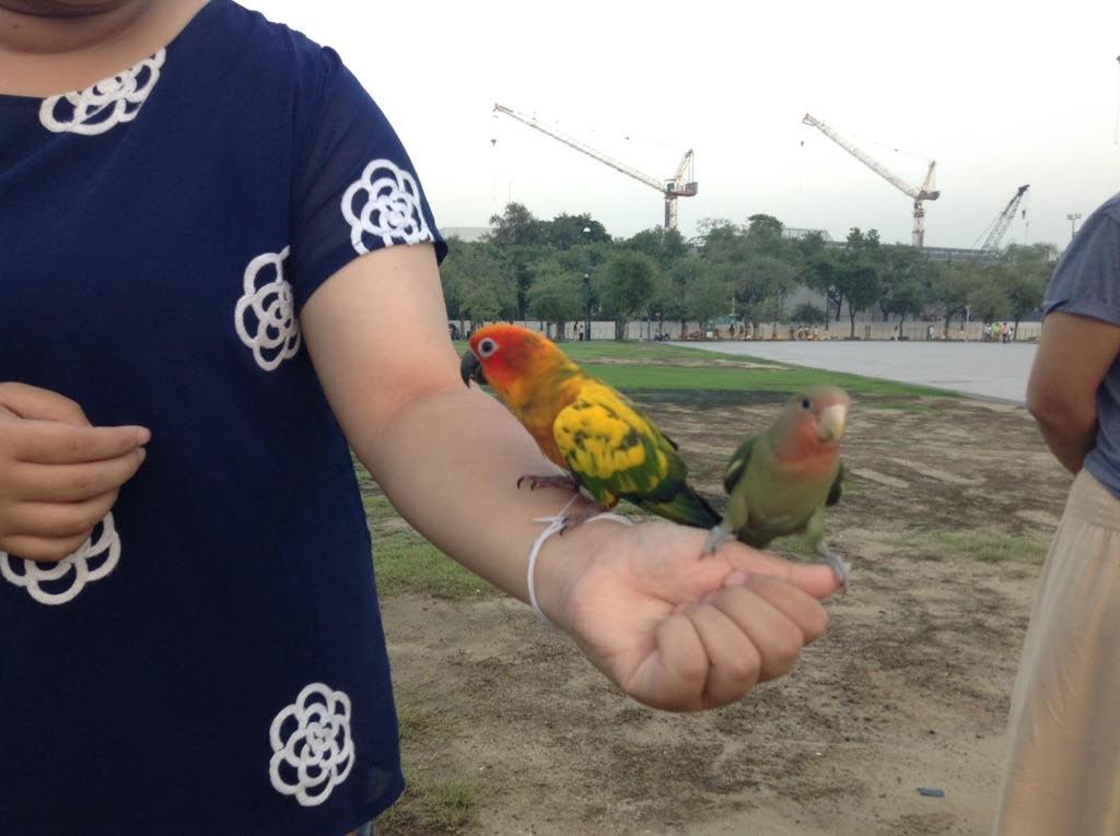 Oiseaux, Bangkok