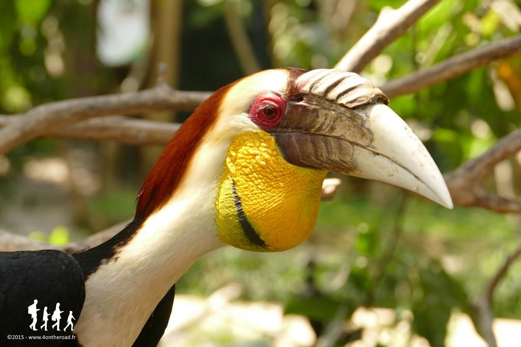 Bali-Bird-Park (119) copie
