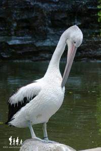 Bali-Bird-Park (134) copie