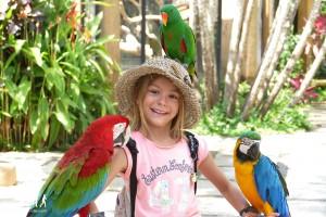 Bali-Bird-Park (37) copie