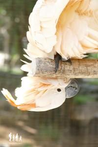 Bali-Bird-Park (62) copie