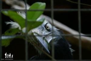 Bali-Bird-Park (93) copie