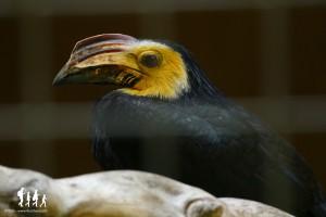 Bali-Bird-Park (96) copie