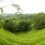 Bali-Jatiluwih (15)