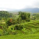 Bali-Jatiluwih (3)