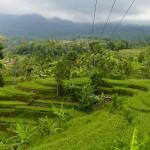 Bali-Jatiluwih (5)