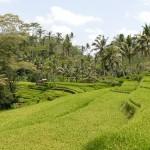 Bali-Temple-Gulung-Kawi (22) copie