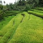 Bali-Temple-Gulung-Kawi (5) copie