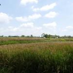 Bali-Ubud (14)