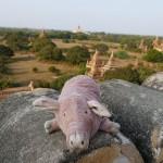 Myanmar-Bagan (16)