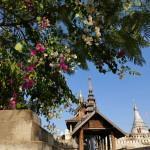 Myanmar-Bagan (50)