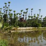 Myanmar-Mandalay-Inwa (37)