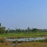 Myanmar-Mandalay-Inwa (7)