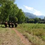 Thailande-Ganesha-Park (209)