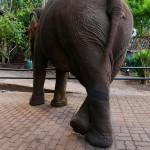 Thailande-Ganesha-Park (37)