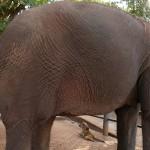 Thailande-Ganesha-Park (57)