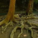 Thaimlande-erawan-watertfall (15)