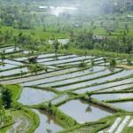 Balik-Tirtagangga (6)