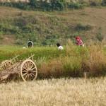 Myanmar-trek-kalaw-inle-J1 (102)