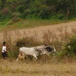 Myanmar-trek-kalaw-inle-J1 (121)