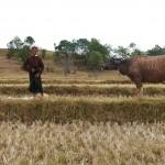 Myanmar-trek-kalaw-inle-J2 (100)