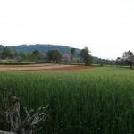 Myanmar-trek-kalaw-inle-J2 (160)