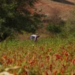 Myanmar-trek-kalaw-inle-J2 (84)