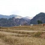 Myanmar-trek-kalaw-inle-J2 (99)
