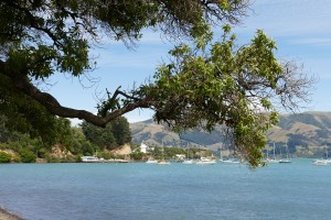 nouvelle-zelande-roadtrip-akaroa-lac-tekapo (6)