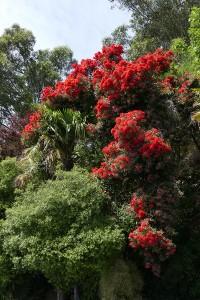 nouvelle-zelande-roadtrip-akaroa-lac-tekapo (7)