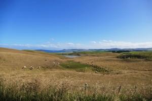 nouvelle-zelande-roadtrip-moeraki-bolders (4)