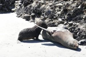 nouvelle-zelande-roadtrip-wharariki-beach (23)