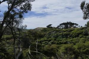 nouvelle-zelande-roadtrip-wharariki-beach (27)
